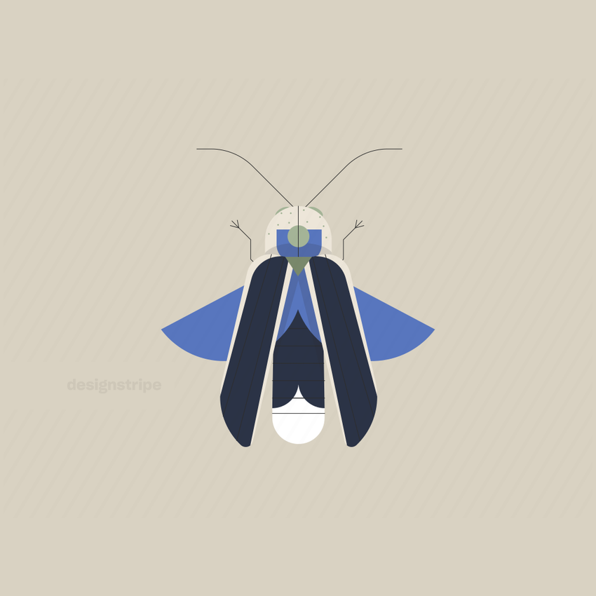 Illustration Of Long Beetle With Wings Open